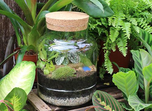 terrarium workshop norfolk Suffolk norwich plants botanical