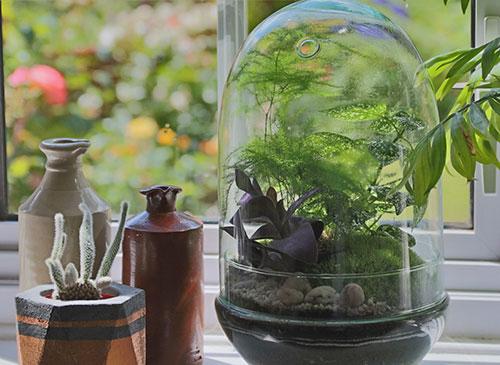 terrarium plant botany workshop east anglia