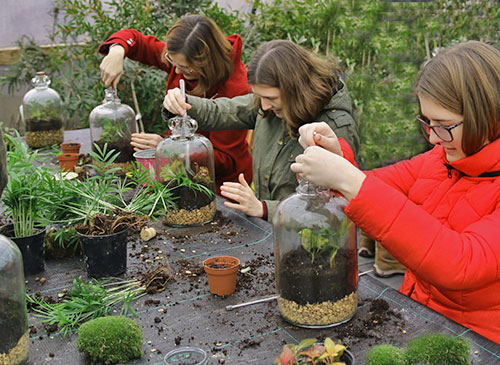 terrarium workshop plant workshop norwich norfolk