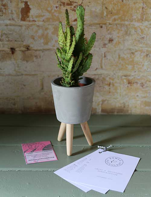 cactus plant monthly subscription uk
