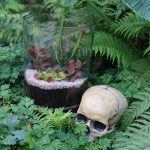 carnivorous plants terrarium halloween workshop norfolk