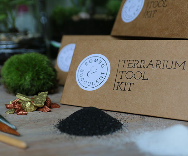 create-your-own-terrarium-with-tool-kit