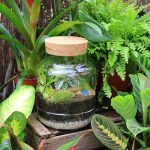 terrarium workshop houseplant cork top terrarium norfolk suffolk london
