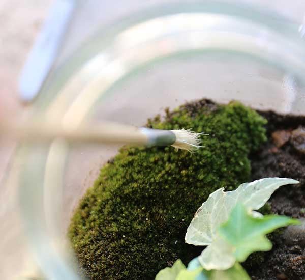 make a childrens terrarium