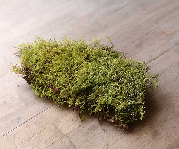 carpet moss uk