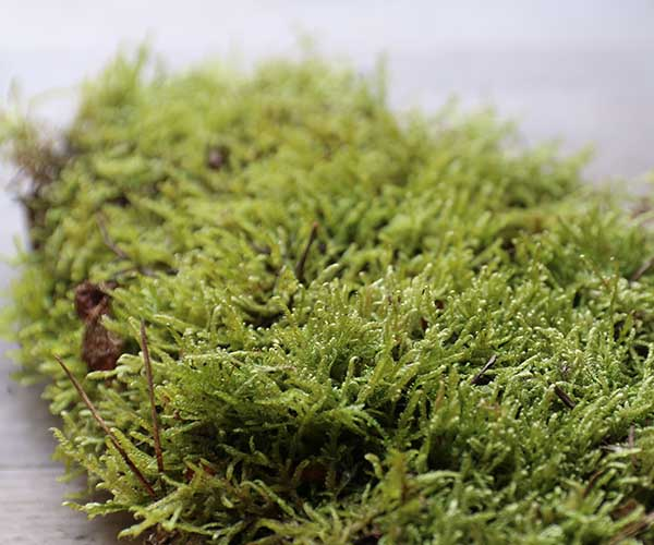 sheet moss carpet moss