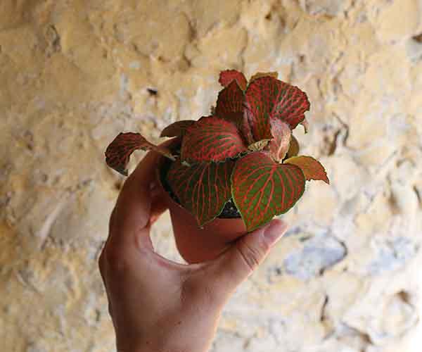 small terrarium plant