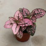 baby plant in pink