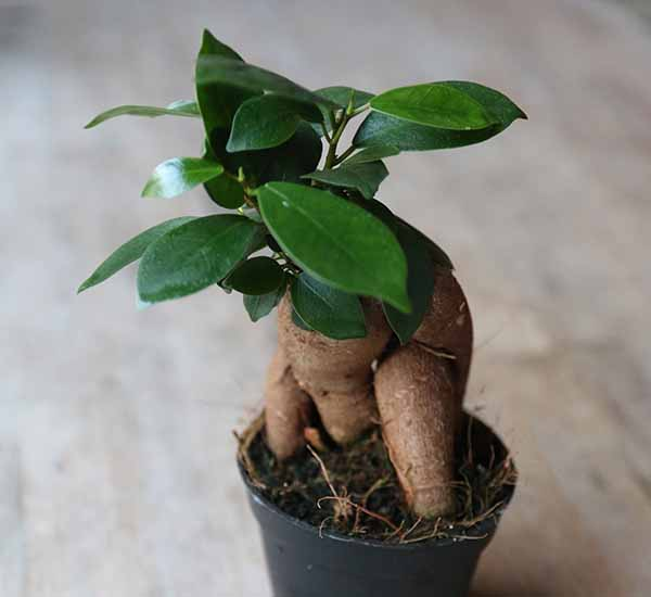 baby house plants