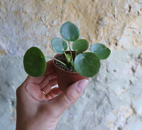 baby plants for sale