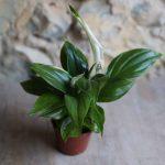 house plants uk