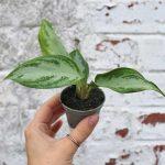 buy house plants uk
