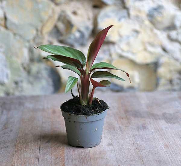 buy plants uk