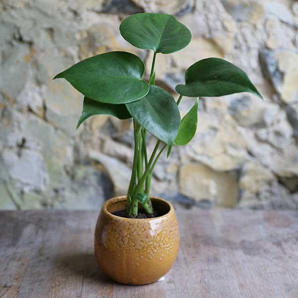 mini round plant pot