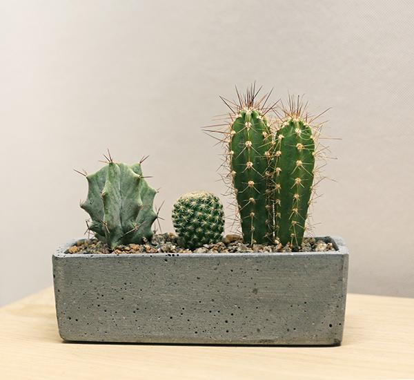 buy plant gifts uk