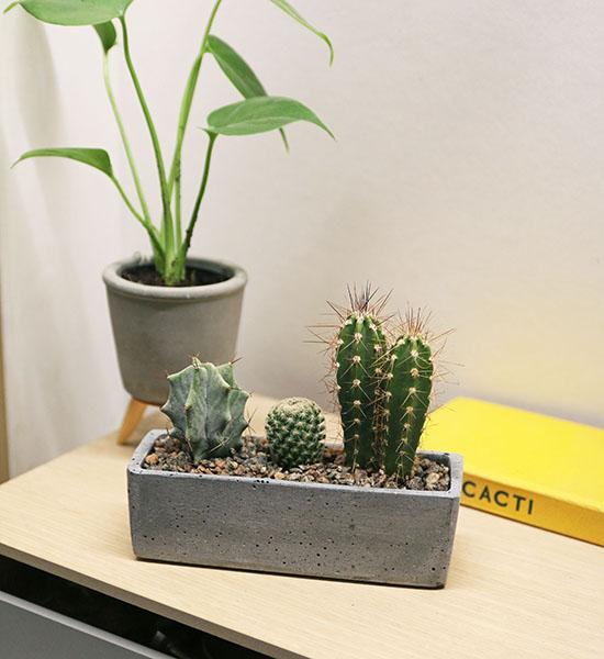 cactus house plant kit