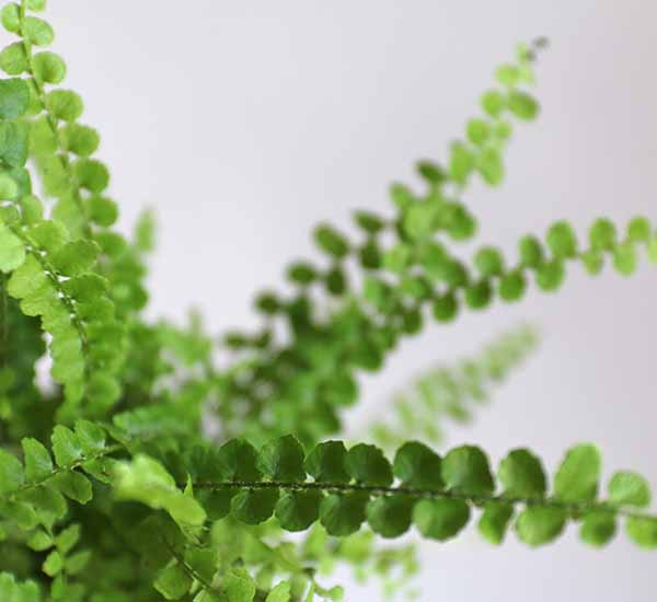 small terrarium fern