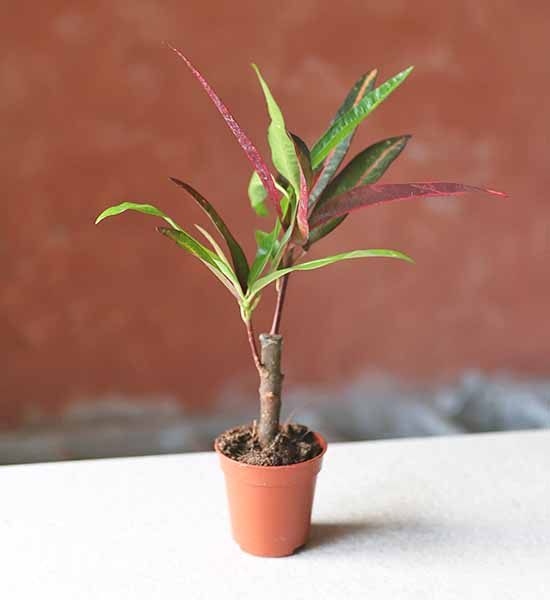 small terrarium plants