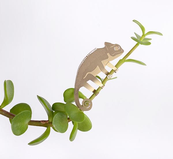 chameleon plant animal